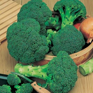 Calabrese Green Sprouting Broccoli