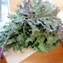 Russian Red or Ragged Jack Kale