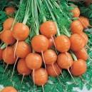 Tonda Di Parigi Carrots
