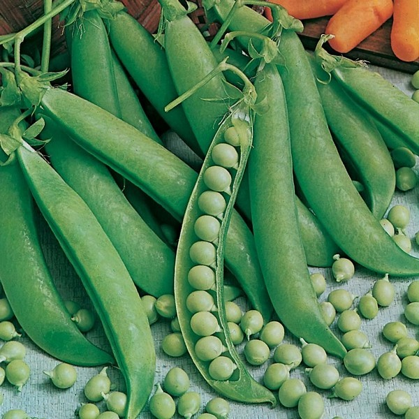 how to grow garden peas from seed