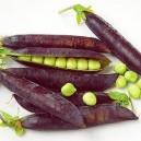 Purple Podded Garden Peas (Capuchin)