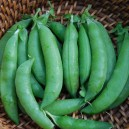 Sugar Ann Snap Peas