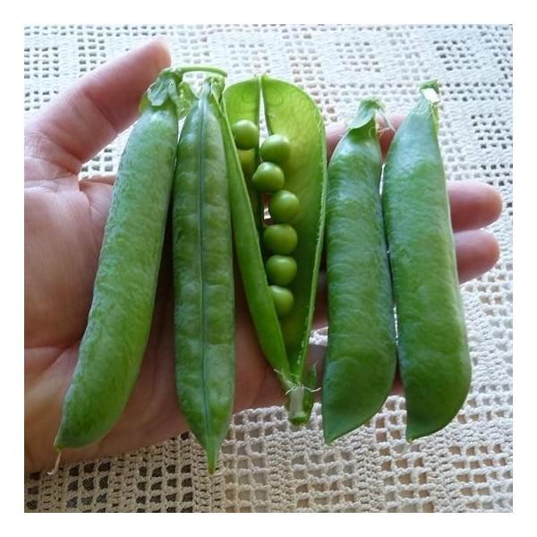 Tall Telephone Garden Peas Organic Seeds