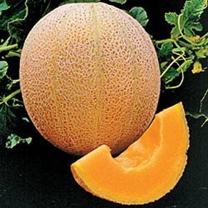 Hales Best Jumbo Melon