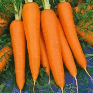 Chantenay Carrots