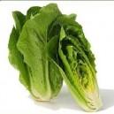 Parris Island Cos Lettuce
