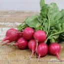 Pink Beauty Radish