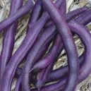 Royalty Purple Pod - Bush Bean