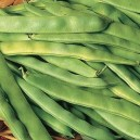 Roma II Bush Beans - Bush Bean