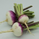 Ideal Purple Top Milan Turnip
