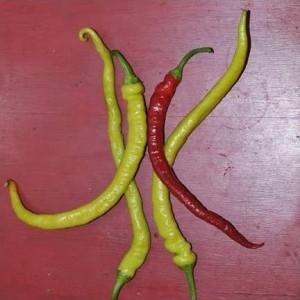 Corbaci Pepper
