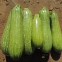 Gray Zucchini
