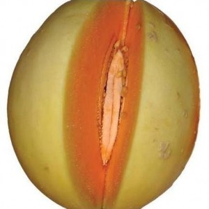 Honeydew Orangeflesh Melon