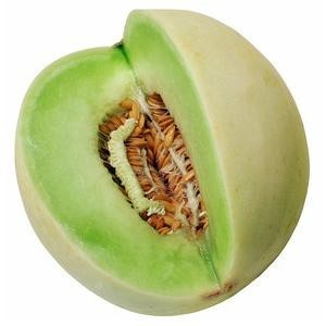 Honeydew Tam Dew Melon