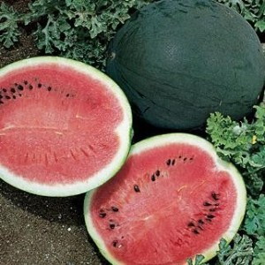 Watermelon Sugar Recipes — Dishmaps
