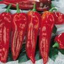 Corno di Toro Rosso Pepper