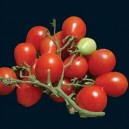 Riesentraube Tomato
