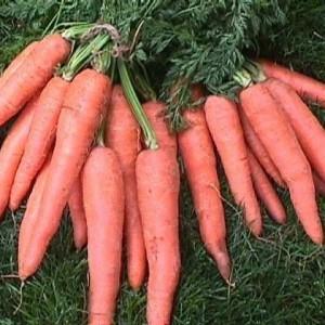 Cape Market Carrots