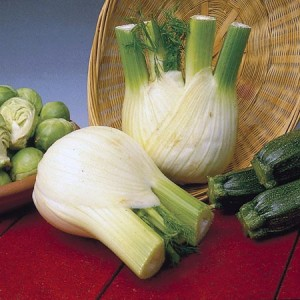 Sweet Florence Fennel