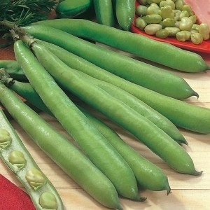 Aquadulce - Broad Bean