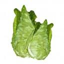 Cape Spitz Cabbage