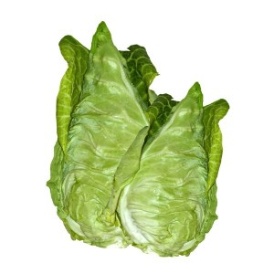 Cape Spitz Cabbage