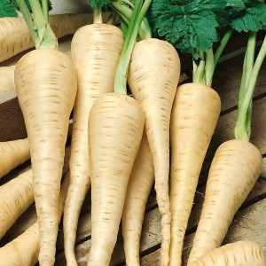 White Gem Parsnip