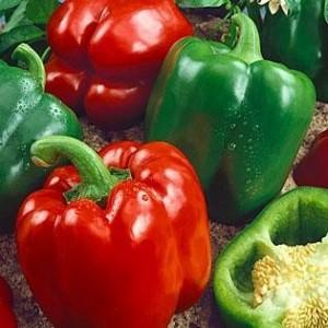 California Wonder (Sweet Pepper)