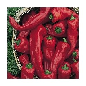 Georgia Flame Pepper