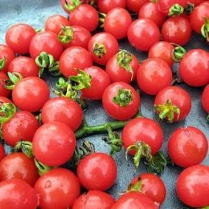 Wild Cherry Tomato