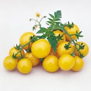 Golden Nugget Cherry Tomato