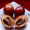 Tree Tomato (Red Tamarillo)