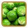 Brussels Sprouts Growing Guide