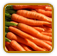 Carrots Growing Guide