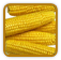 Corn Growing Guide
