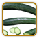 Cucumber Growing Guide