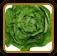 Lettuce Growing Guide