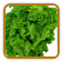 Mustard Greens Growing Guide