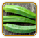 Okra Growing Guide