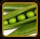 Peas Growing Guide