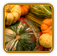 Winter Squash Growing Guide